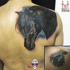 Cover Up Potrait Horse